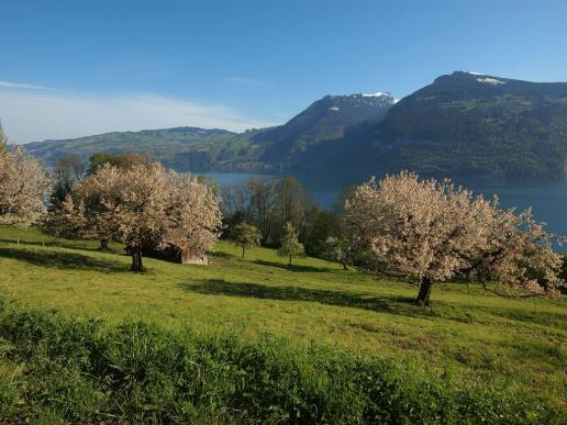 Frühling am Thunersee