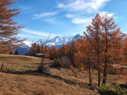 Goldener November im Wallis